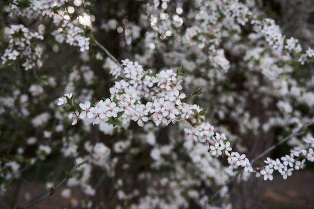 Belle photo floue de fleurs printanières.