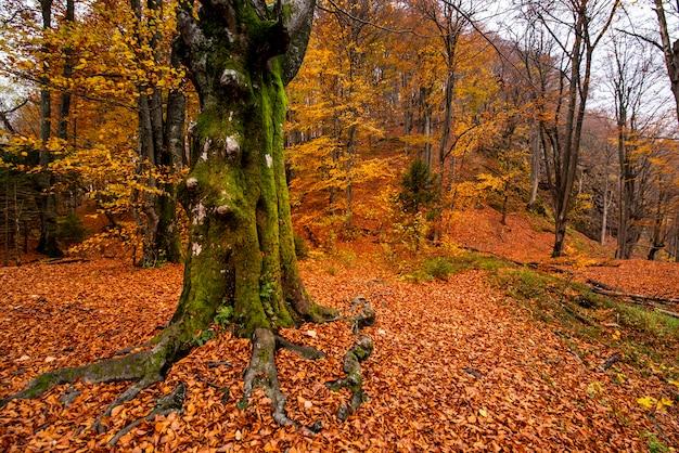 Belle photo d'une forêt dans le parc national des lacs de plitvice en croatie