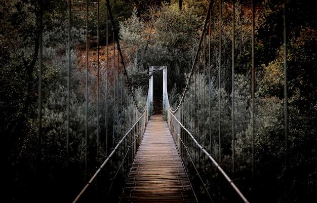 Belle photo horizontale d'un long pont entouré de hauts arbres dans la forêt