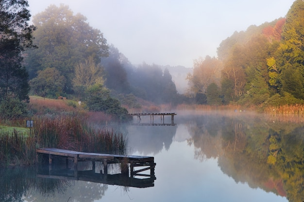 Belle photo d'un lac entouré d'arbres avec un brouillard se formant au-dessus