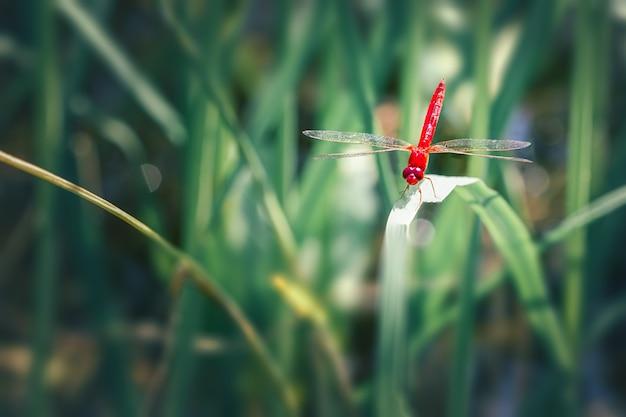 Belle photo nature de libellule sur le congé