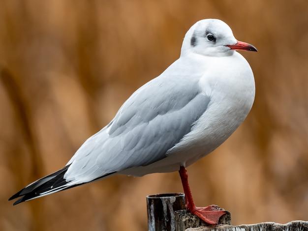 Belle photo d'un oiseau blanc debout sur une clôture en bois