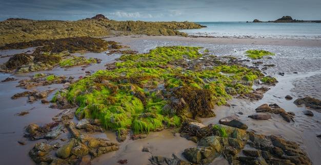 Belle photo panoramique d'un paysage de roches moussues avec une mer calme