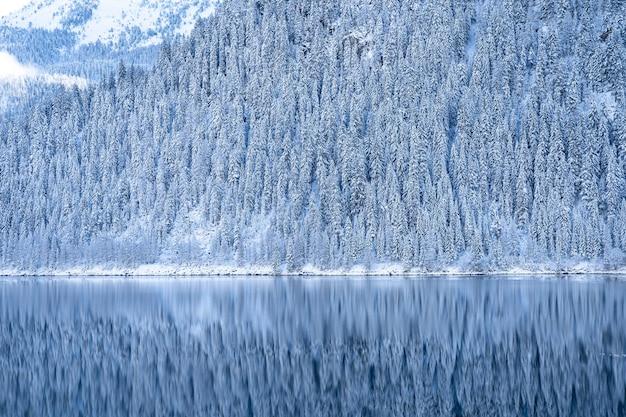 Belle photo de paysage d'arbres blancs enneigés près d'un lac bleu clair