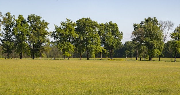 Belle photo d'un pré avec des arbres à la surface