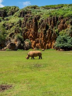 Belle photo verticale d'un seul rhinocéros se nourrissant d'herbe dans un champ près de grandes formations de pierre