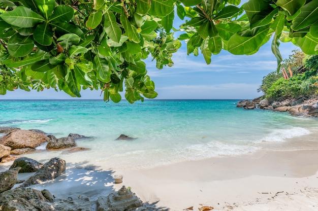 Belle plage blanche aux feuilles vertes sur la mer tropicale