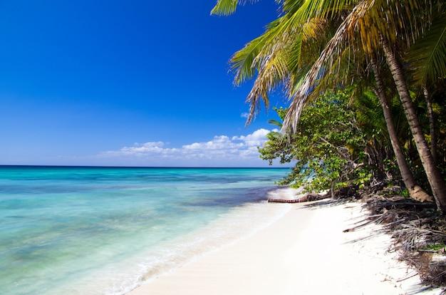 Belle plage et mer tropicale