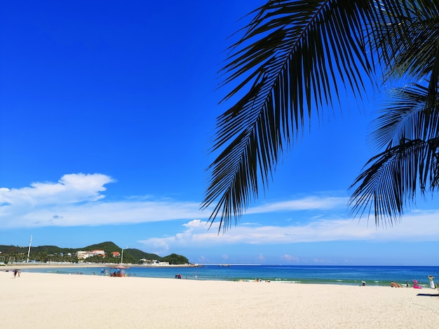 Belle plage de palmiers