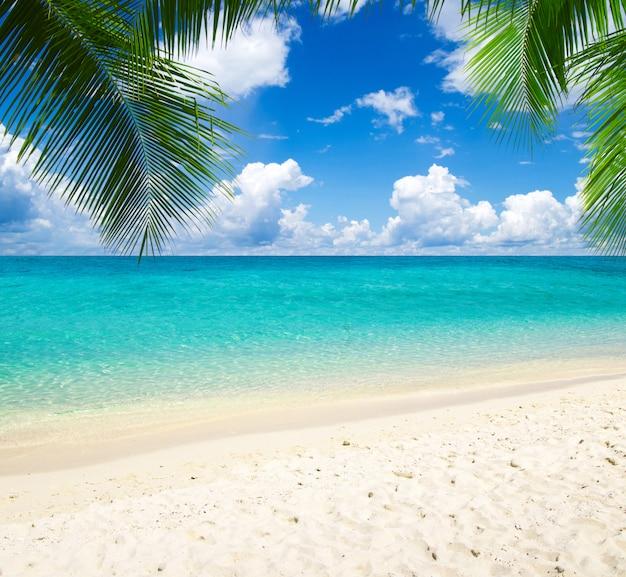 Belle plage avec palmiers