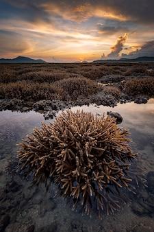 Belle plage tropicale et corail de corne de cerf sur la mer au lever du soleil.