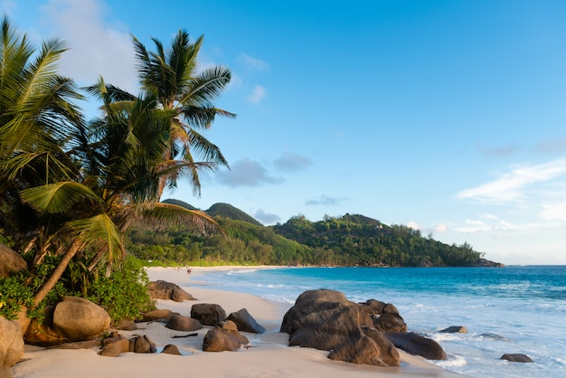 Belle plage tropique avec palmiers et pierres