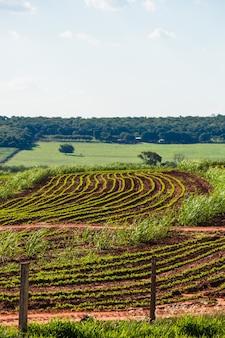 Belle plantation rurale de ferme de canne à sucre avec ciel bleu sur une journée ensoleillée
