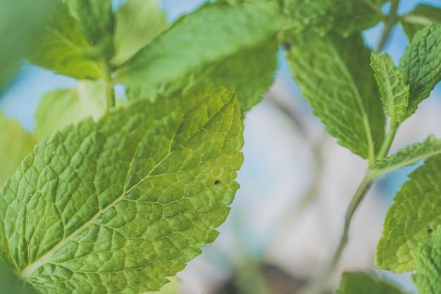 Belle plante à feuilles naturelles