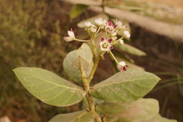 Une belle plante à fleur