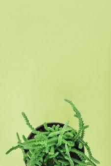 Belle plante en pot