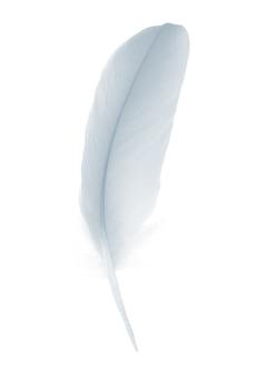 Belle plume blanche, bleu bébé isolé sur fond blanc