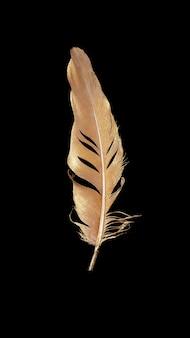 Belle plume dorée isolée sur fond sombre