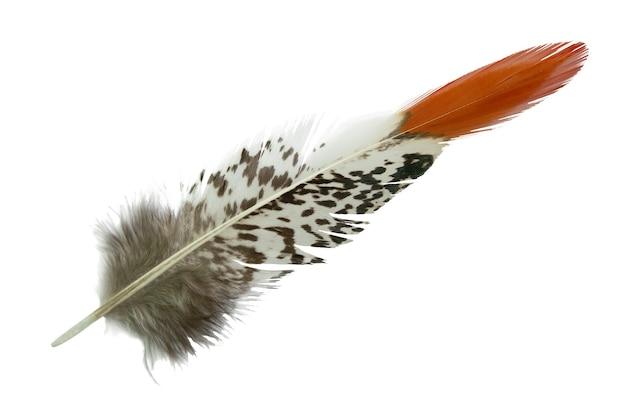 Belle plume de faisan isolé sur blanc