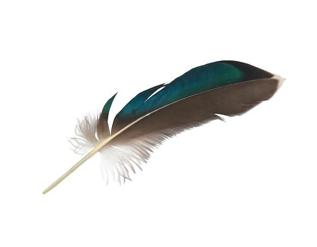 Belle plume sur fond blanc