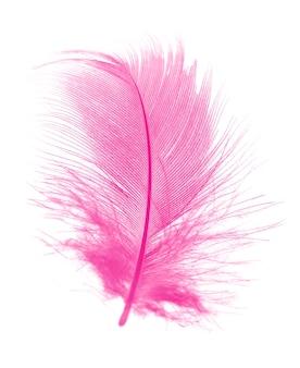 Belle plume de magenta rose isolée sur fond blanc