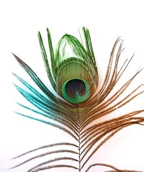 Belle plume de paon sur fond blanc avec espace de copie