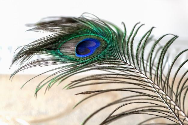 Belle plume de paon vue rapprochée