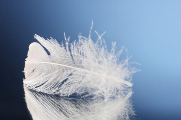 Belle plume sur une surface bleue
