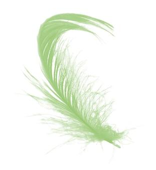 Belle plume verte isolée sur fond blanc