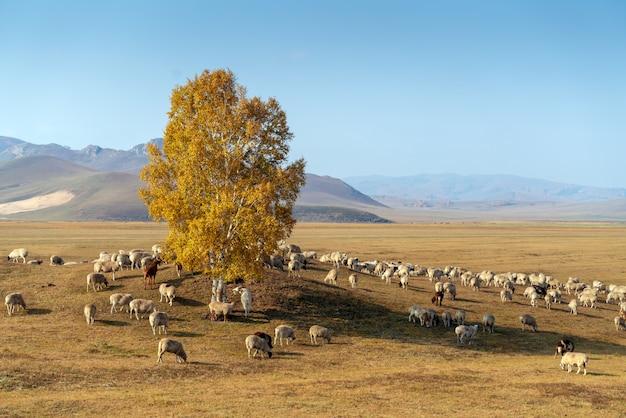 Belle prairie et troupeau