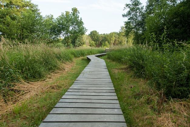 Belle promenade à travers le marais aux pays-bas