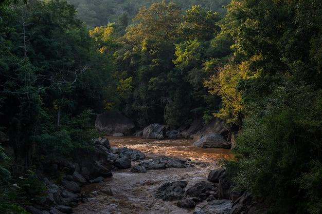 Belle rivière dans la jungle de la forêt tropicale verte. rivière en forêt de montagne est nature co