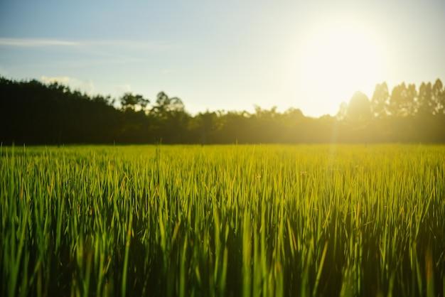 Belle rizière et nuages avec coucher de soleil.