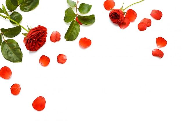 Belle rose rouge avec des feuilles sur blanc