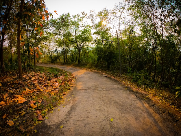 Belle route avec des arbres des deux côtés pendant le coucher du soleil.