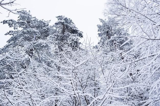 Belle route blanche de neige de forêt d'hiver enneigée avec une piste de ski arbres et buissons couverts de neige
