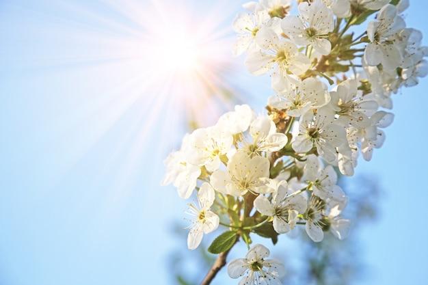 Belle Scène De Nature Avec Arbre De Fleurs En Fleurs. Photo Premium