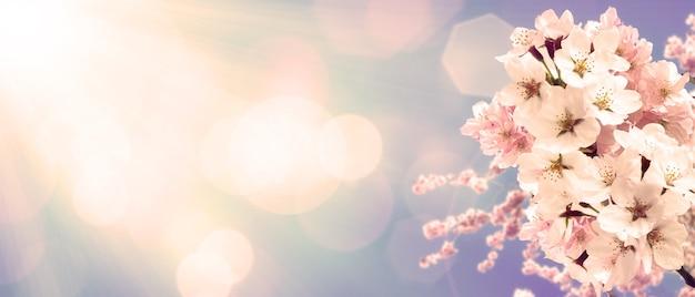 Belle scène de nature avec arbre de fleurs en fleurs.
