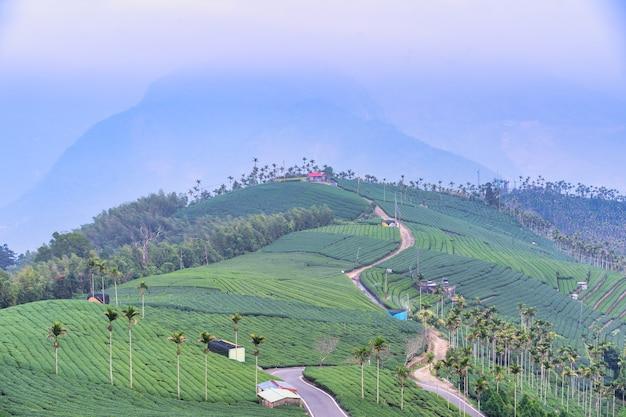 Belle scène de rangées de jardin de culture de thé vert avec ciel bleu et nuage, concept de design pour le produit de thé frais, espace de copie.