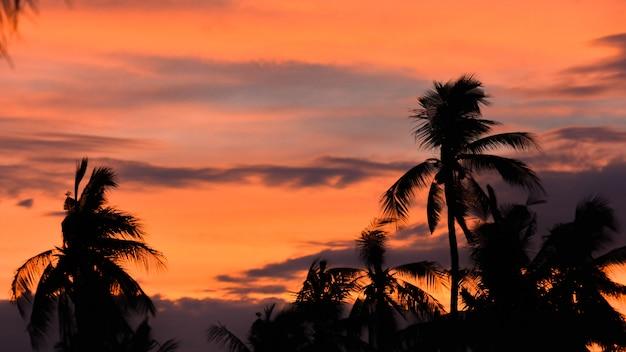 Belle silhouette cocotier avec ciel coucher de soleil sur l'île