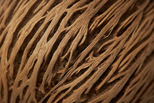 Belle texture volumétrique de la coque de noix de coco, gros plan