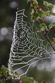 Belle toile d'araignée après la pluie