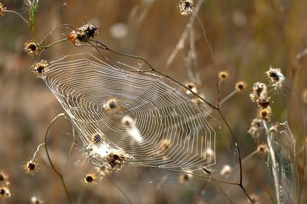 Belle toile d'araignée photographiée aux premières lueurs du matin