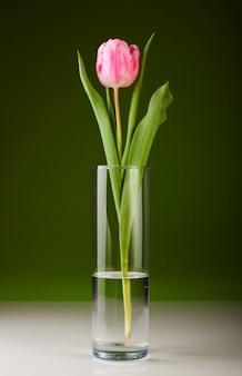 Belle tulipe rose fraîche pour votre conception