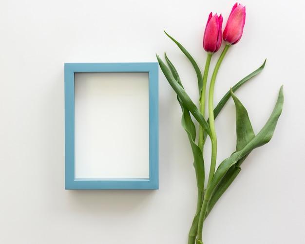 Belle tulipe rouge avec cadre blanc sur la surface blanche