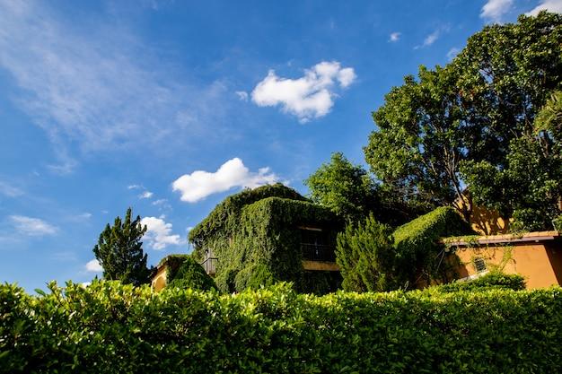 Belle vieille maison avec des murs d'arbres