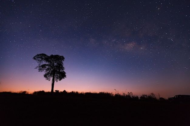 Belle voie lactée et silhouette d'arbre dans un ciel nocturne avant le lever du soleil