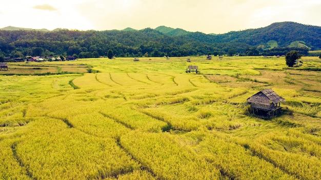 Belle vue aérienne de rizières en terrasse champs et chalet