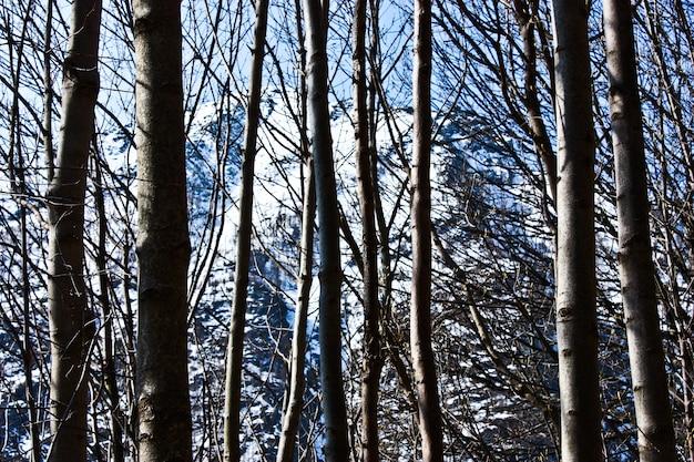 Belle vue sur les alpes à travers la forêt, bonne pour le papier peint