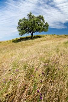Belle vue sur la campagne rurale de la région de l'algarve.